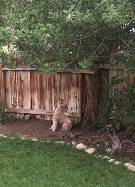 simon squirrel watching